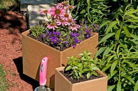 Card Board Gardening by Birds & Blooms Magazine