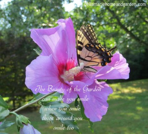 Rose of Sharon Butterfly Flower Petal